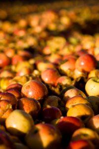 Fête de la pomme dimanche 14 octobre 2018 à Chambéry le Haut