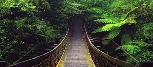 A Walk in Nature - Kasauli