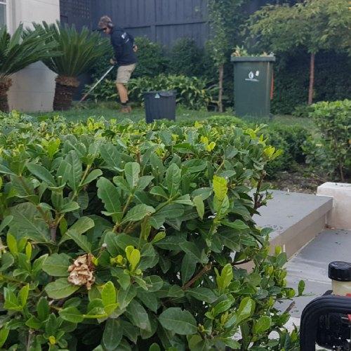 landscape gardener melbourne