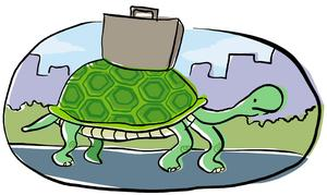 turtle moving