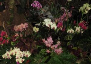 Orchids in Queen Elizabeth Park