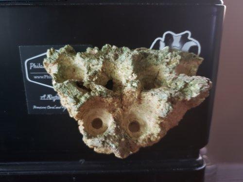 magnetic frag rack rock nj reef club