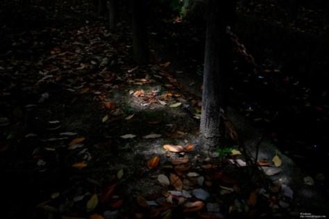 光に照らされた落ち葉