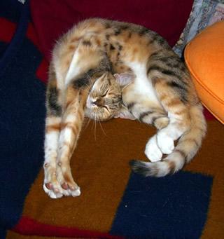 猫の軟体寝相w
