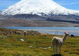 Altiplano Nedir ve Nerededir? Bölgenin Genel Özellikleri Nelerdir?