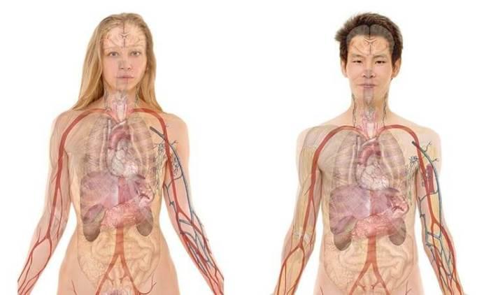 Anatomi Nedir?