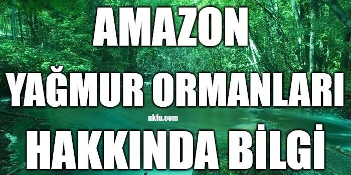 Amazon Yağmur Ormanları Hakkında Bilgi