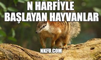 N ile hayvan - N Harfi İle Başlayan Hayvanlar