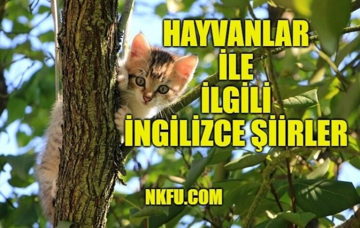 Hayvan İngilizce Şiirler
