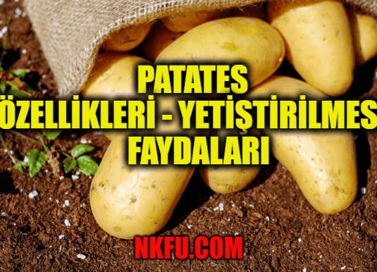 Patates Nedir? Patates Özellikleri – Yetiştirilmesi – Faydaları