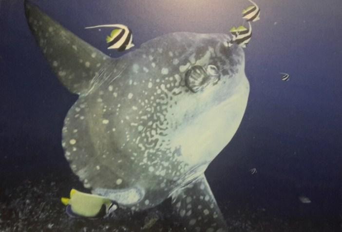 En ağır kemikli balık
