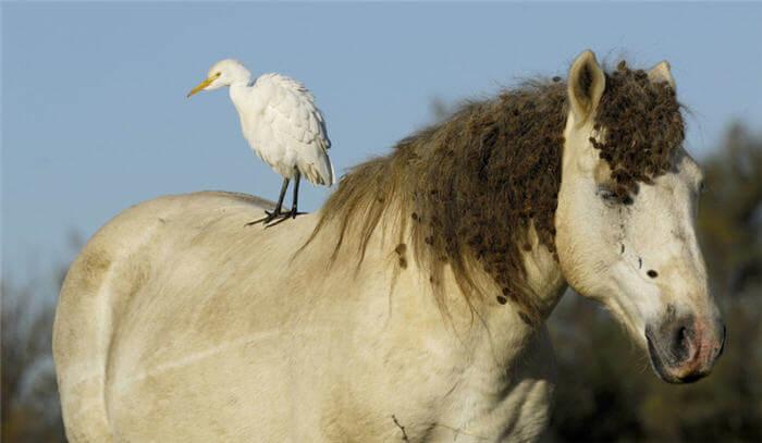 Hava Kirliliğinin Hayvanlar Üzerindeki Etkileri ve Zararları