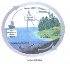 Doğada Madde Döngüleri ve Özellikleri (Karbon Azot Fosfor Döngüleri)