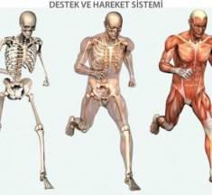 Vücudumuzdaki Sistemlerin Sağlığını Korumak İçin Neler Yapmalıyız?