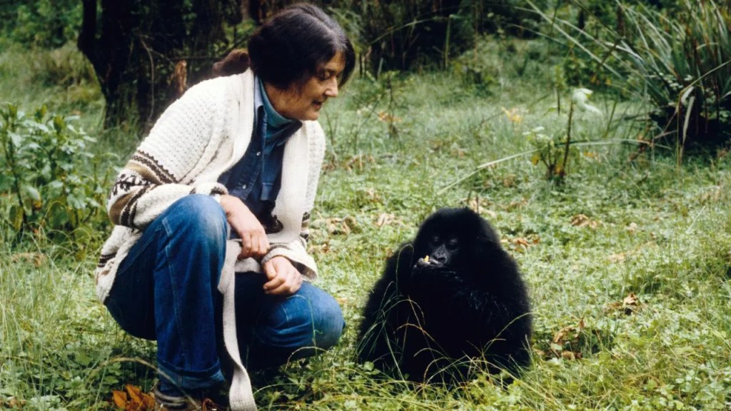 Dian Fossey with baby Gorilla was an American zoologist who undertook an extensive study in Rwanda Africa