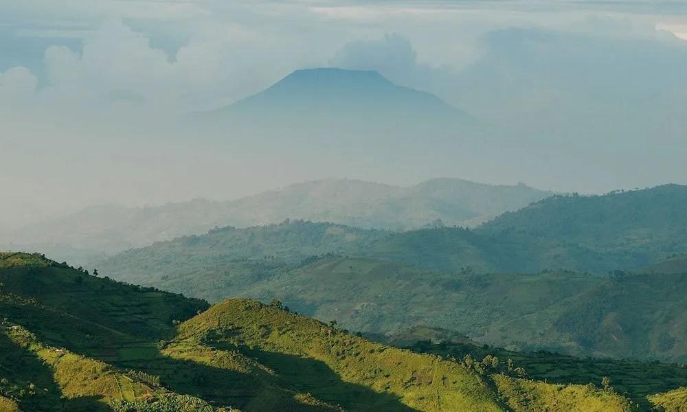 Uganda flora and fauna