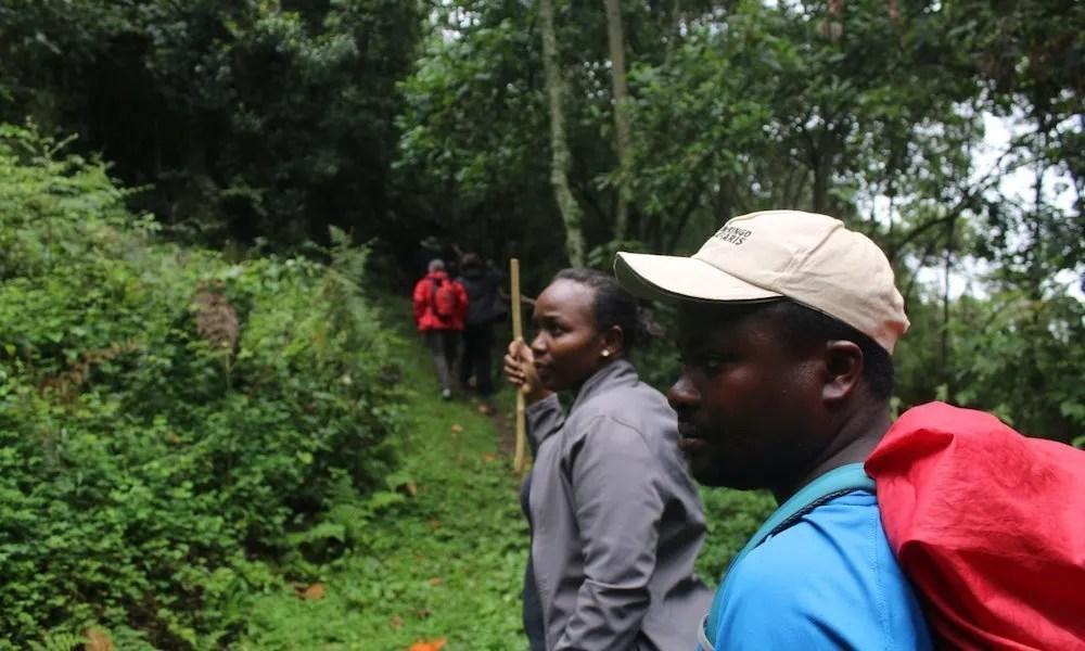 Uganda forests