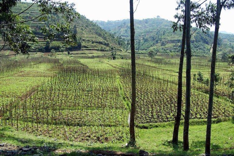 Typical Rwanda Landscape