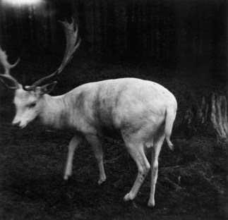 On the 18th of September 1960 an anonymous German photographer took this picture of a white deer.