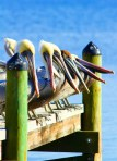 Pier Group Anne Baehr Pensacola Branch, FL Photography