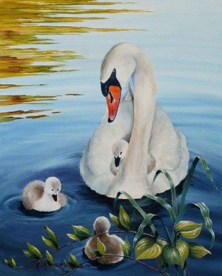 Kathryn-Kleekamp-Shawme-Pond-Swans