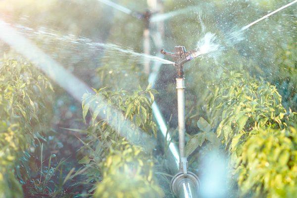 impianti-irrigazione-verde