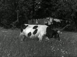 https://i1.wp.com/www.nlfilmdoek.nl/wp-content/uploads/2011/09/fanfare1.jpg