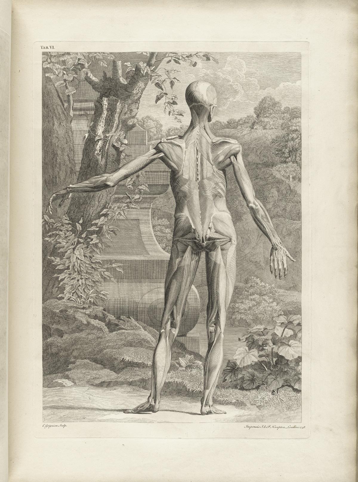 Historical Anatomies On The Web Bernhard Seigfried