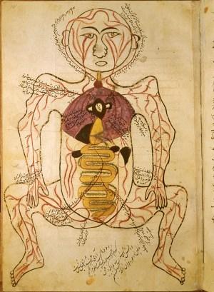 Islamic Medical Manuscripts in the NLM  MS P 19