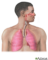 Illustration of the respiratory system