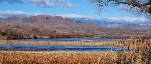 Photo of the Bosque del Apache National Wildlife Refuge