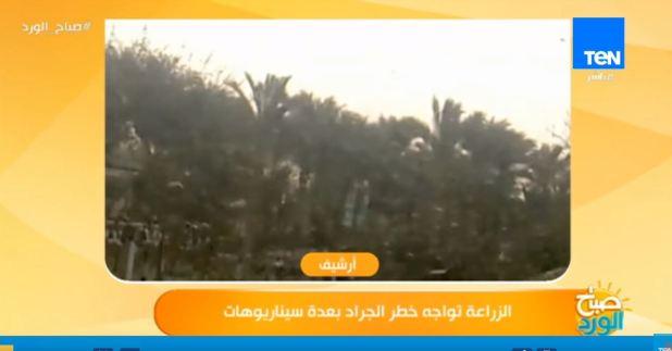 الزراعة تواجه خطر الجراد في مصر بعدة سيناريوهات