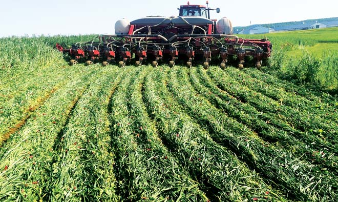 Tall Heavy Planters