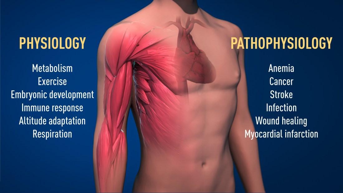 Pathological processes