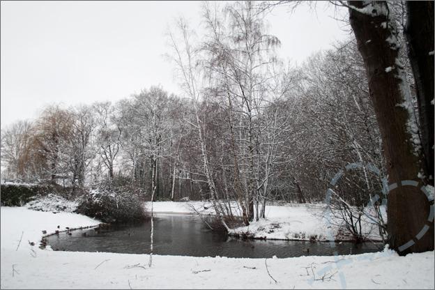sneeuw vijver