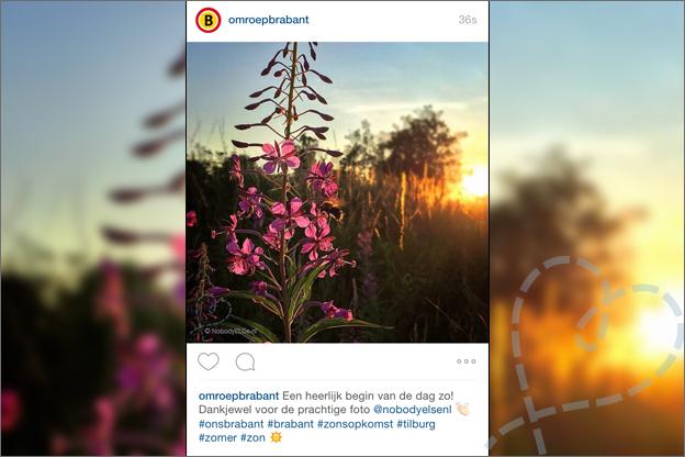 Instagram Omroep Brabant