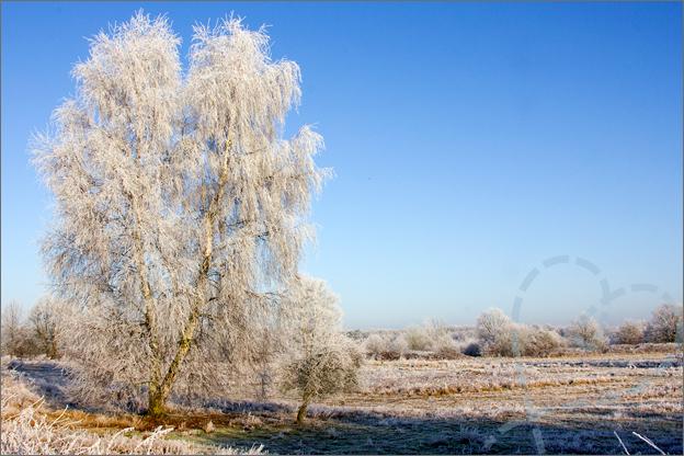 foto_winter_3_boom