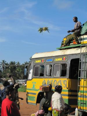 selous_bus