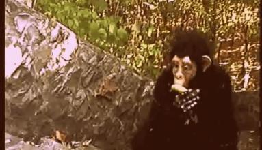 EPISODE 78: WRATH OF THE SKUNK APE (1997)