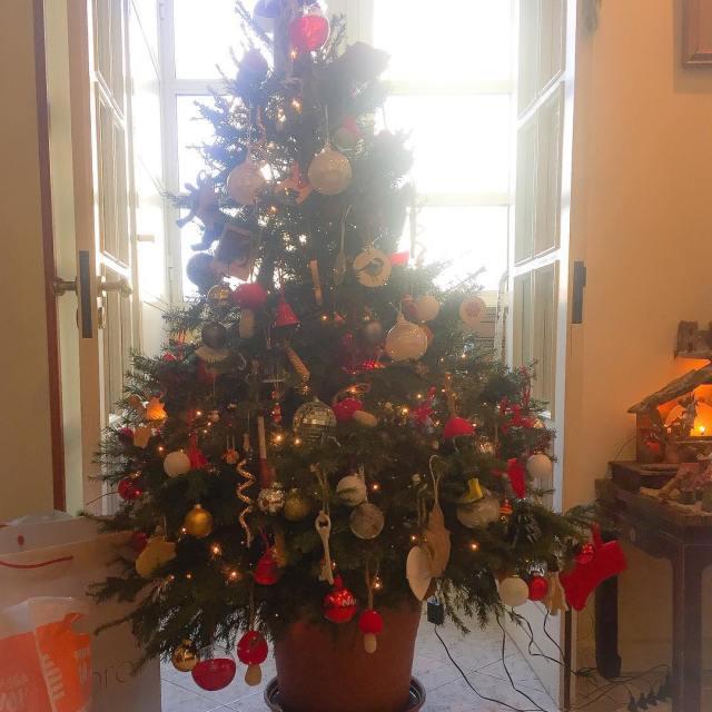 E anche questanno lalbero di Natale  fatto! per lahellip