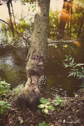 Czarna Woda - Dolina Czarnej Wody