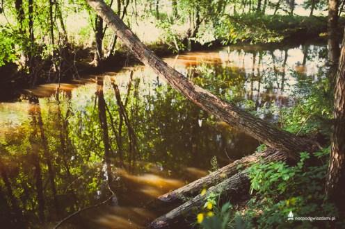 Dolina_czarnej_wody_rzeka (26 of 32)