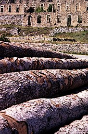 L'Authion – A 2.060 mt di altitudine nelle Alpi Marittime, in Francia, a due passi dall'Italia, si snoda ad anello il circuito dell'Authion che mette in mostra i resti suggestivi di molte installazioni militari. Alcune tracce di esse dal cromatismo assimilabile a quello dei tronchi d'albero qui in primo piano hanno partorito questa immagine di equilibrata composizione.