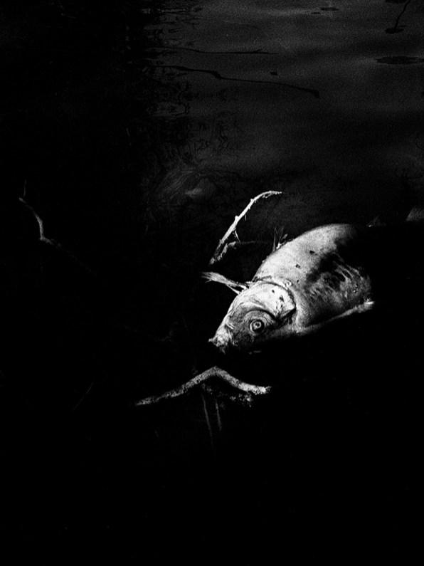 © Federico Arcangeli. Splinters
