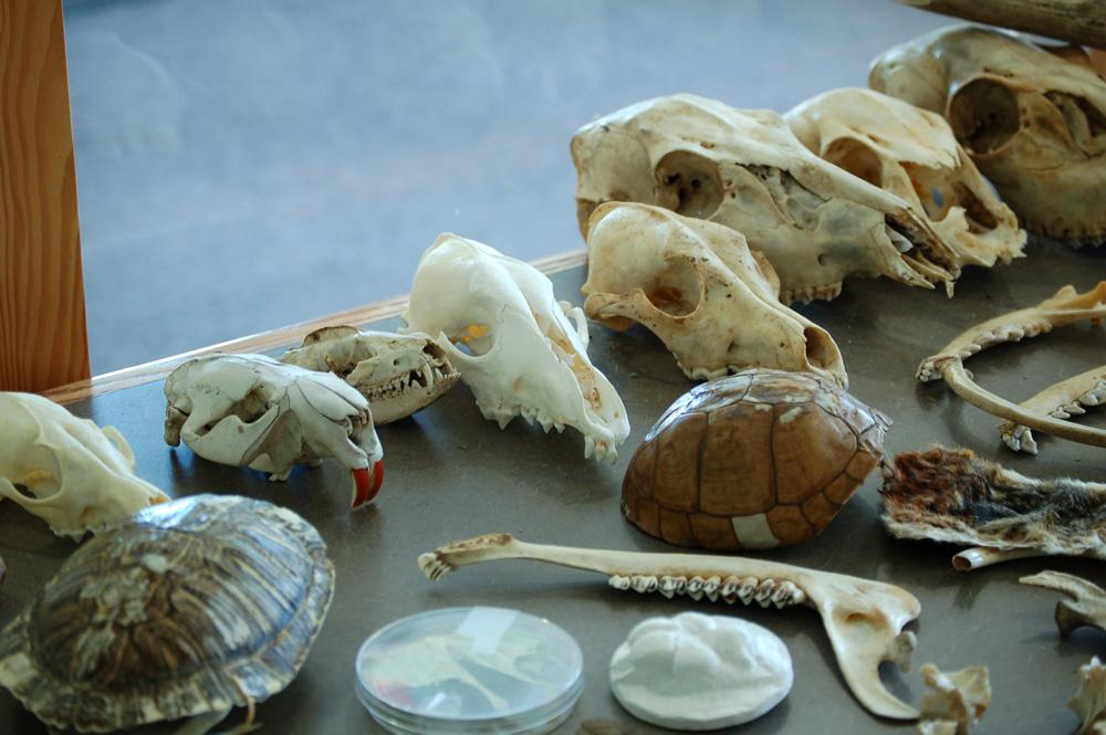 6_skulls