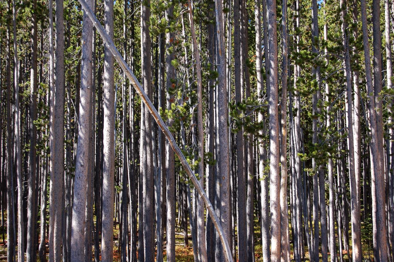 31_trees_2