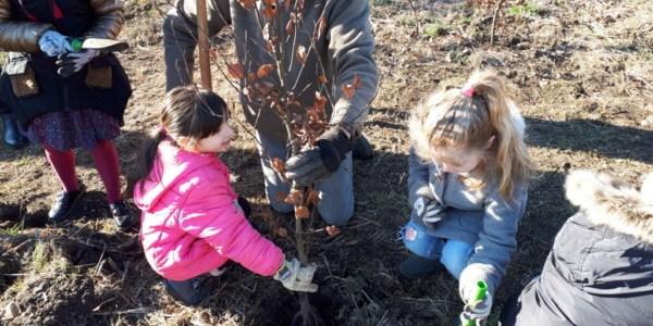 Plantation d'arbres avec les écoles de Marles-le-Mines
