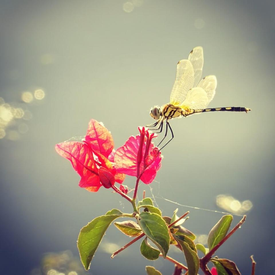 Dragonfly by Lake Pichola, Udaipur