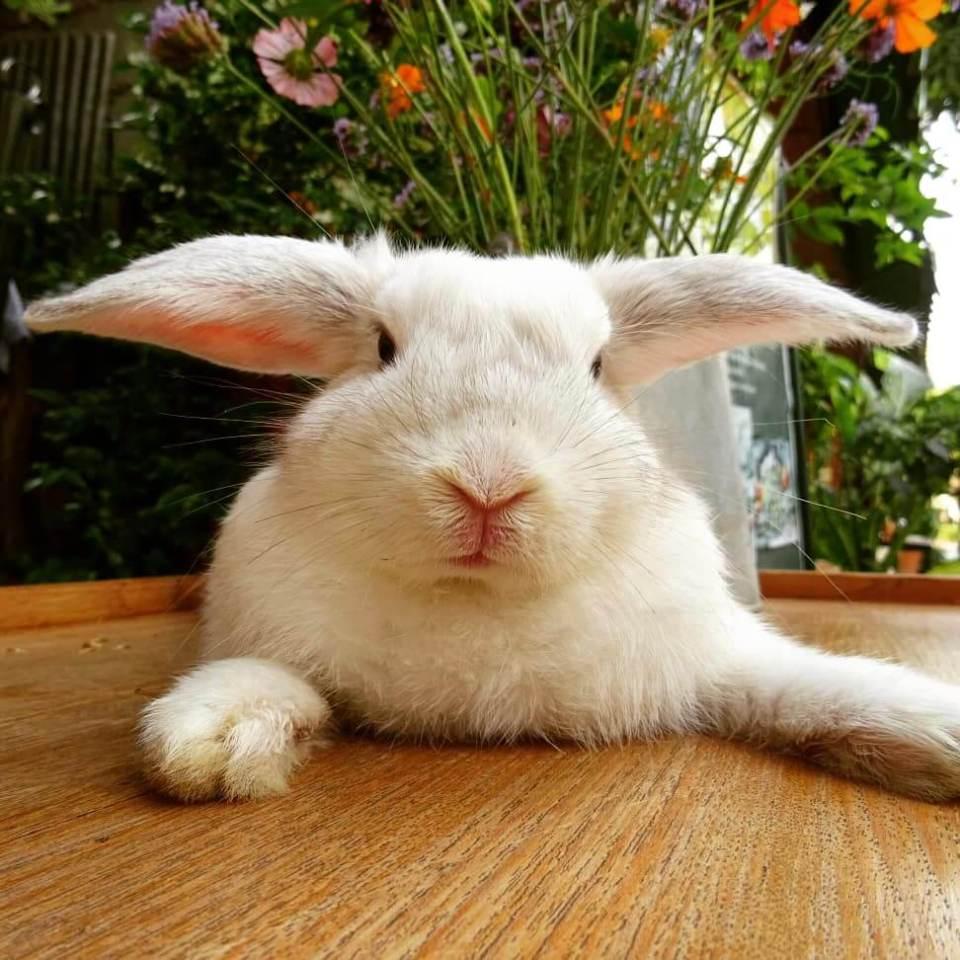 pai bunny cafe