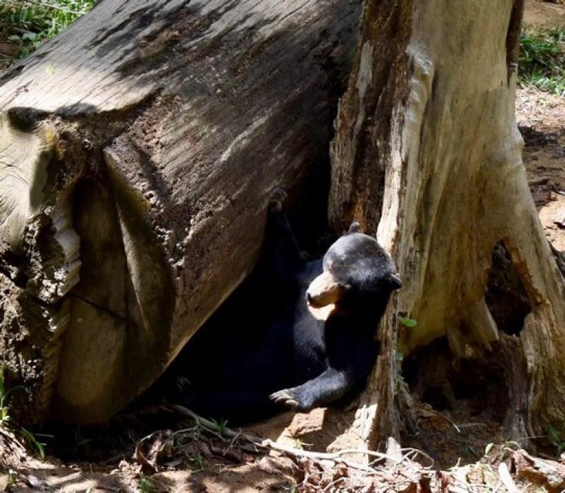 Visit Sepilok Sun Bear